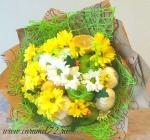 Зефир и хризантема